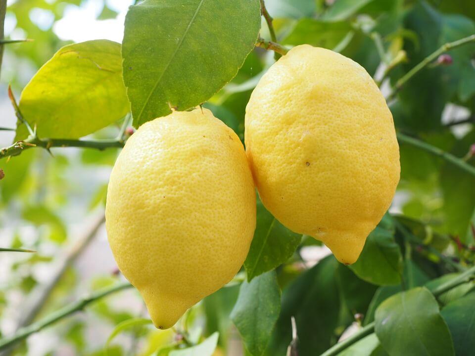 Лимон для похудения рецепты