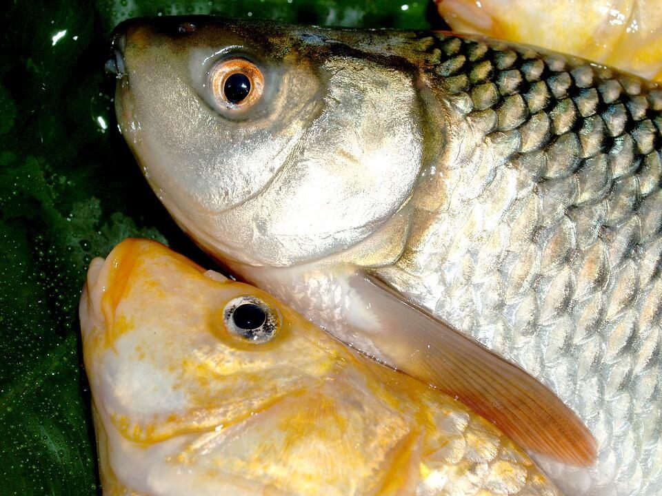 как выбрать рыбу на рынке