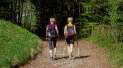 Скандинавская ходьба – в чем польза? Правильная техника скандинавской ходьбы
