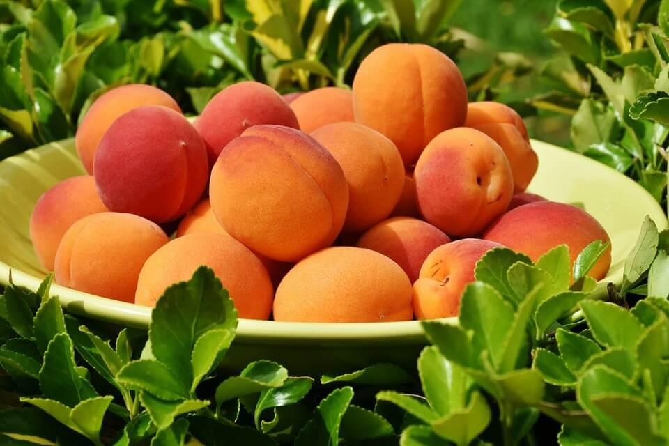 от фруктов толстеют