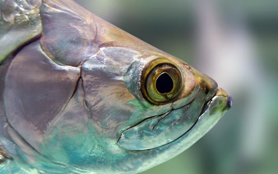 какая рыба самая полезная