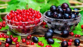 Смородиновая диета: минус 3–6 кг за месяц без усилий
