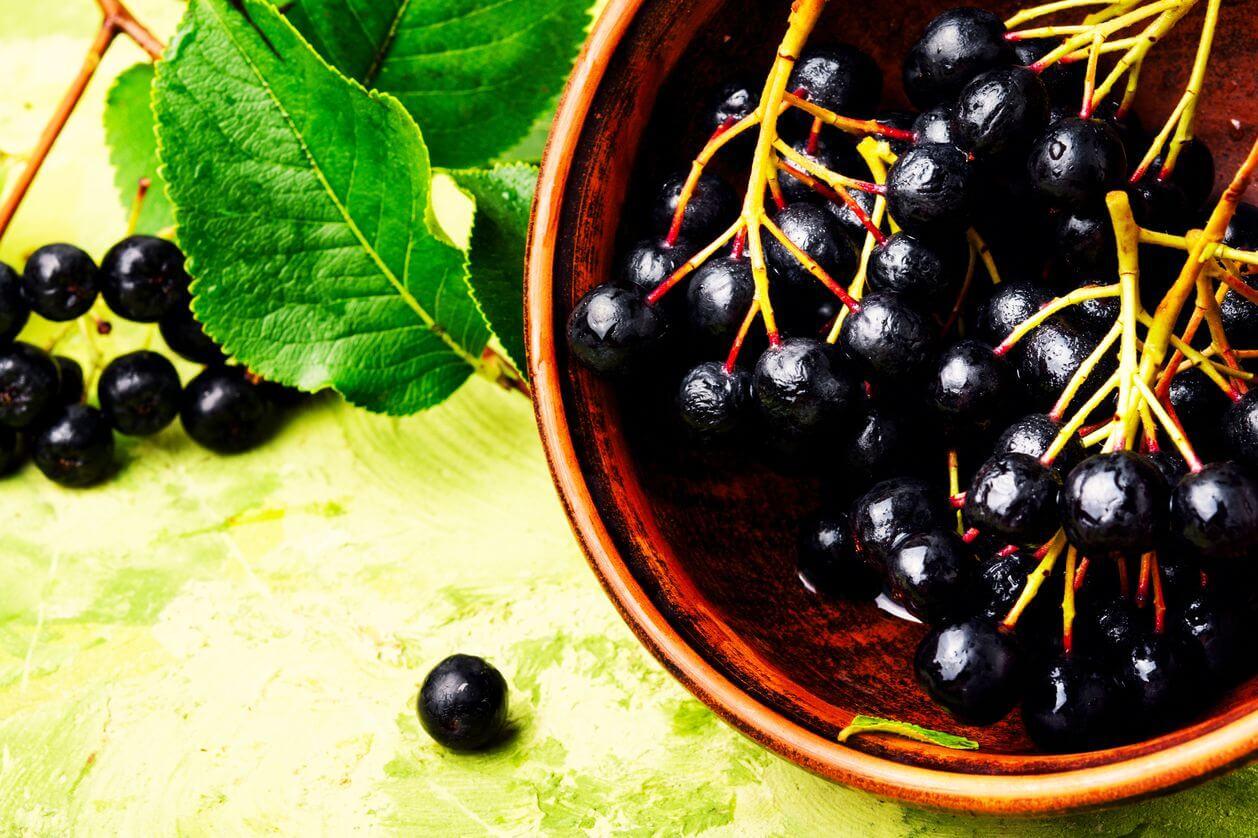 черноплодная рябина польза
